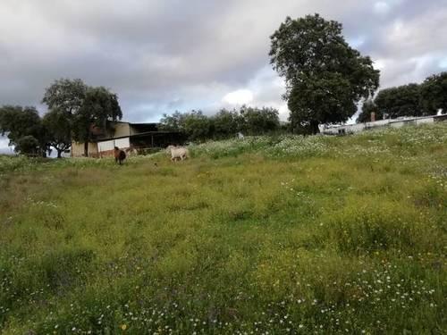imagen 3 de Venta de finca ganadera en Cáceres