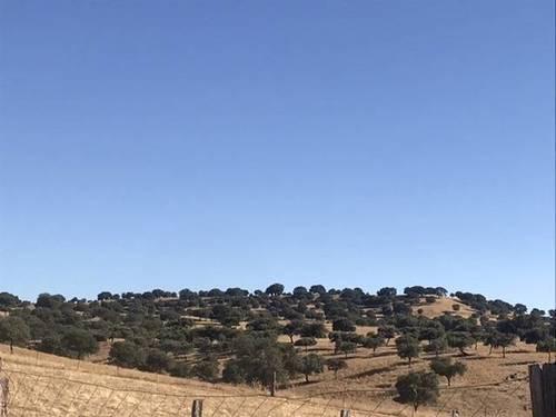 imagen 3 de Venta de finca ganadera en Badajoz