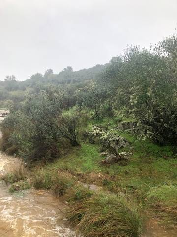 imagen 5 de Venta de finca rústica en Cáceres