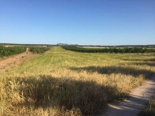 imagen 2 de Venta de finca de almendros en ecológico en Hellín (Albacete)