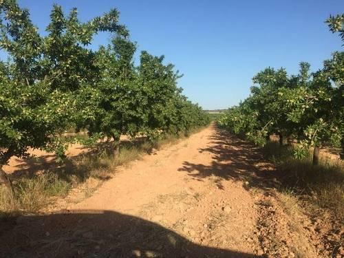 imagen 3 de Venta de finca de almendros en ecológico en Hellín (Albacete)