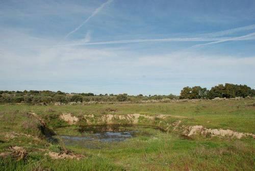 imagen 4 de Venta de finca agrícola y ganadera en Aldea del Cano (Cáceres)