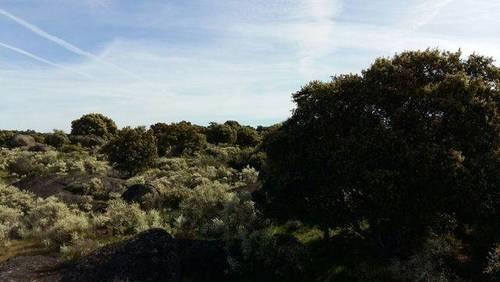 imagen 5 de Venta de finca agrícola y ganadera en Aldea del Cano (Cáceres)