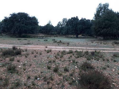 imagen 1 de Venta de finca en Letur (Albacete)