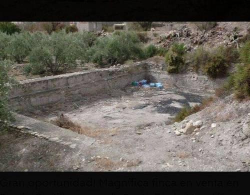 imagen 3 de Venta de finca de olivos en Almería