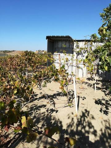 imagen 1 de Venta de viña en Torreperogil