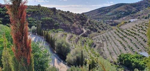 imagen 5 de Venta de casa de campo en Nerja (Málaga)