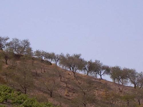 imagen 4 de Venta de cortijo en Castaras (Granada)