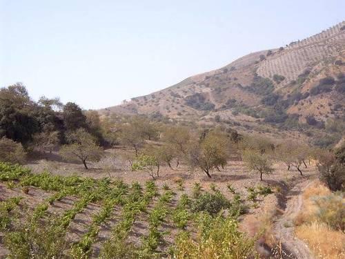 imagen 3 de Venta de cortijo en Castaras (Granada)