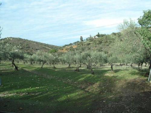 imagen 4 de Venta de casa de campo en Cáceres