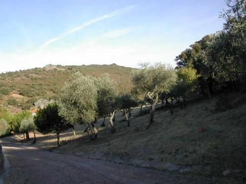 imagen 5 de Venta de casa de campo en Cáceres
