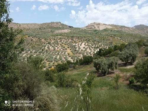 imagen 1 de Venta de terreno con olivos en Quentar (Granada)