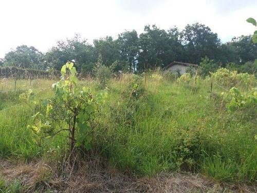 imagen 3 de Venta de terreno rústico vallado en Álava