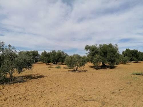 imagen 1 de Venta de finca en Huelva