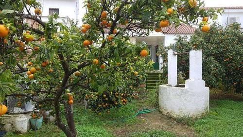 imagen 1 de Venta de casa rural en Gerena (Sevilla)