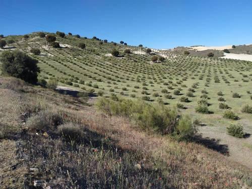imagen 1 de Finca para pistachos 52 hectáreas Granada