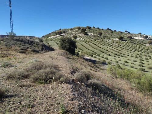 imagen 4 de Finca para pistachos 52 hectáreas Granada
