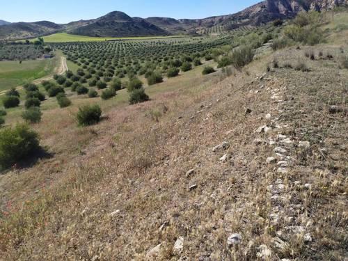 imagen 3 de Finca para pistachos 52 hectáreas Granada