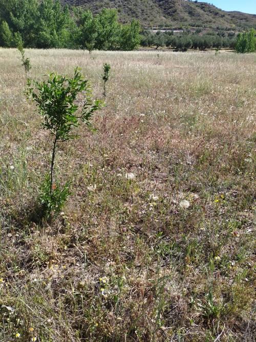 imagen 5 de Finca para pistachos 52 hectáreas Granada