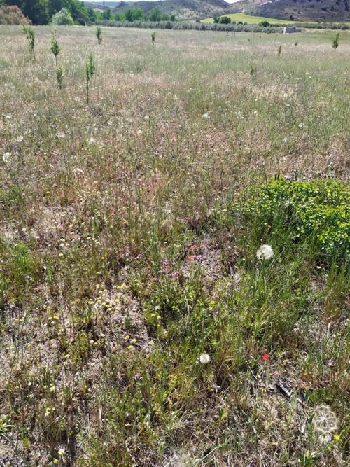imagen 6 de Finca para pistachos 52 hectáreas Granada