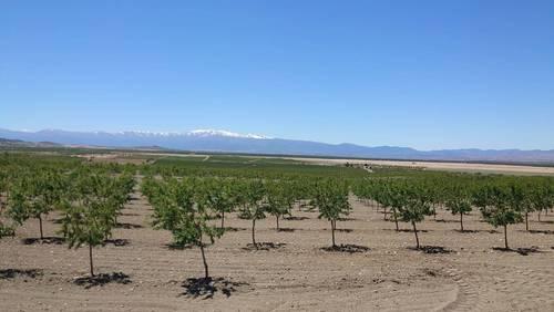 imagen 2 de Finca de almendros de 200 htas ecológica en Guadix