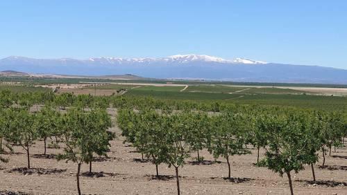 imagen 1 de Finca de almendros de 200 htas ecológica en Guadix