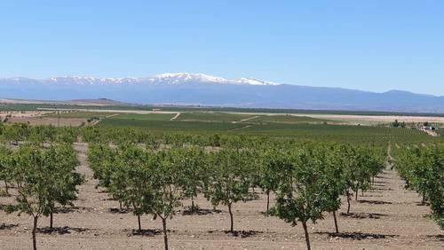 imagen 6 de Finca de almendros de 200 htas ecológica en Guadix