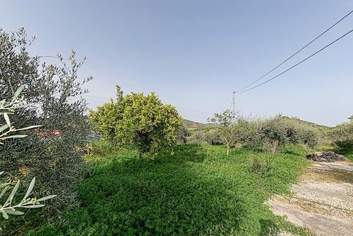 imagen 2 de Casa de campo con arboles frutales , olivos y piscina