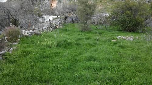 imagen 3 de LOS CORRALES