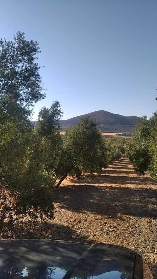 imagen 1 de Venta de olivar y finca de recreo en Antequera