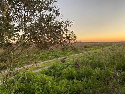 imagen 2 de Terreno en venta (8000m.)