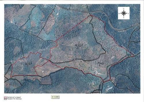 imagen 20 de Finca en Sierra Morena