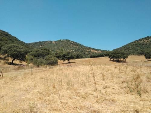 imagen 5 de Finca en Sierra Morena