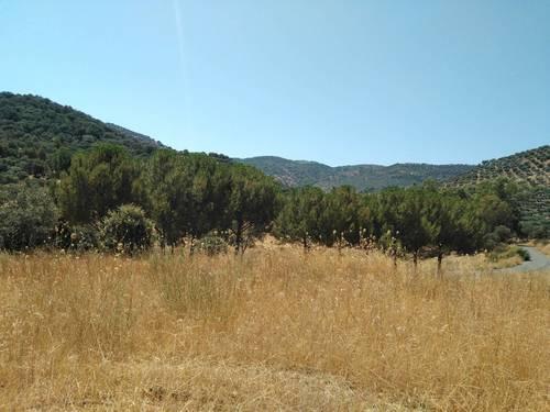 imagen 8 de Finca en Sierra Morena