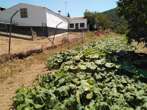 imagen 19 de Finca en Sierra Morena