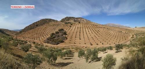 imagen 3 de Terrenos con Olivos en Álora/Valle de Abdalajis