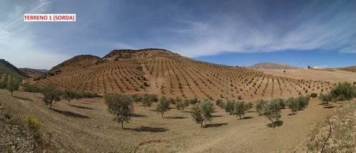 imagen 2 de Terrenos con Olivos en Álora/Valle de Abdalajis